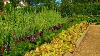 How to Plant Carrots From Seeds   P. Allen Smith Classics