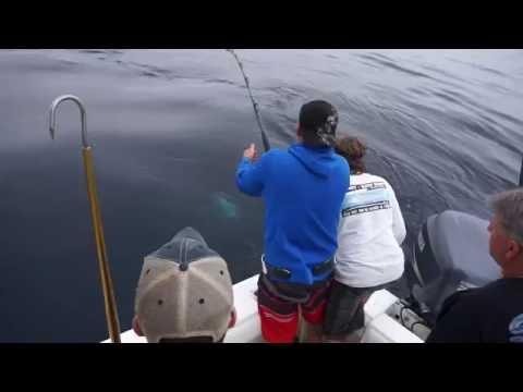 BlueFin Tuna Fishing Ocean City Maryland