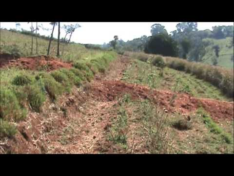 Vetiver system vetiver grass water and soil for Soil and water conservation