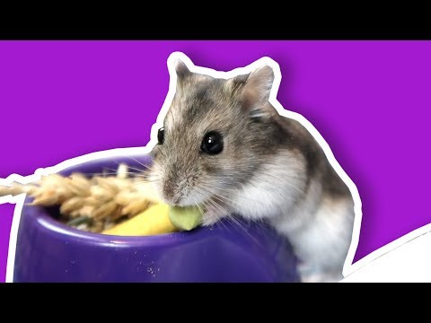 Setting Up A Large Hamster Cage | Our Hamster Cage Tour - The Hoopsters