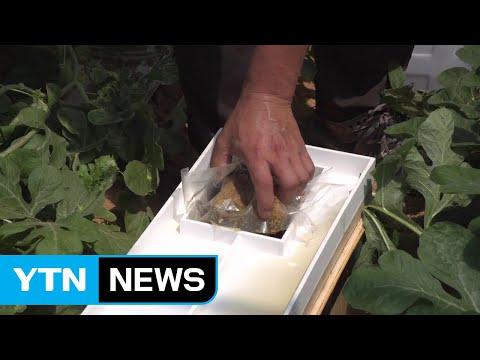 사용 편리한 꿀벌 전용 새 벌통 개발 / YTN