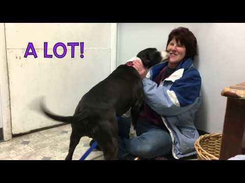 Visit Eve at Danbury Animal Welfare Society in Bethel, CT