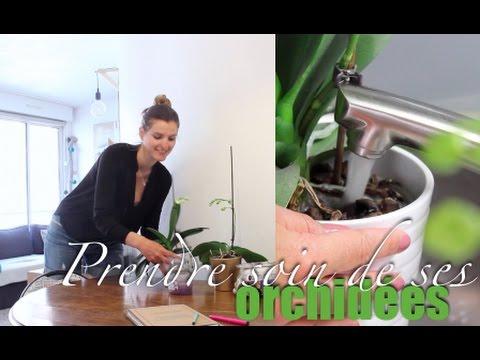 Comment prendre soin de ses orchid es youtube - Prendre soin des orchidees ...