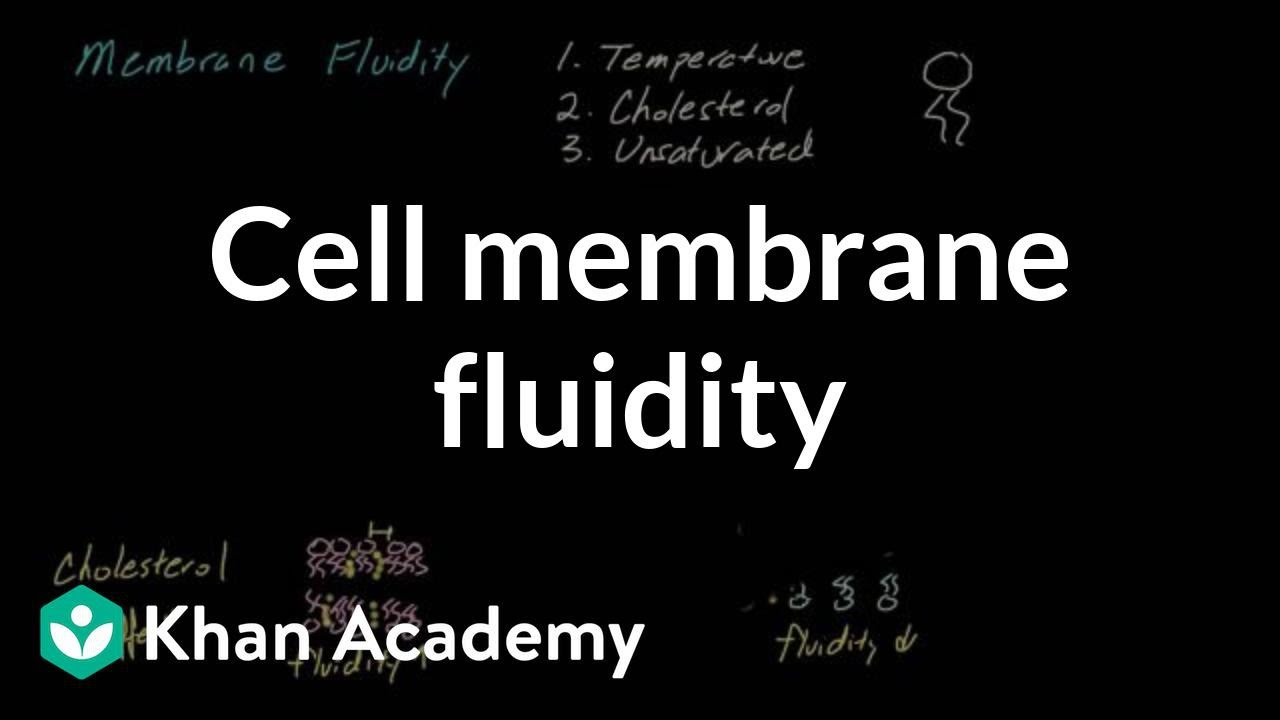Cell membrane fluidity (video) | Cells | Khan Academy