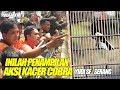 Piala Rakyat  Inilah Penampilan Aksi Kacer Cobra Yudi Sf Serang  Mp3 - Mp4 Download