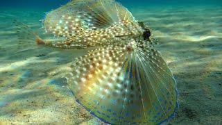 Топ 5 самых необычных аквариумных рыб