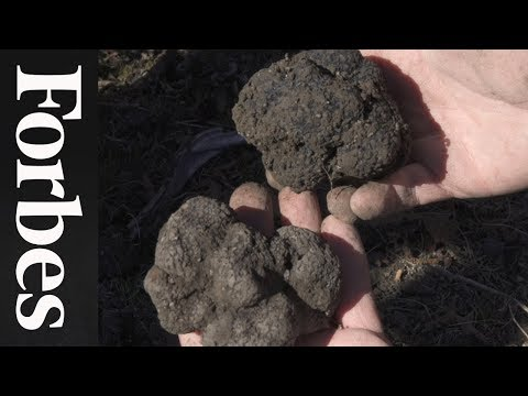 Could Truffles Be California's Next Big Cash Crop? | Forbes Life