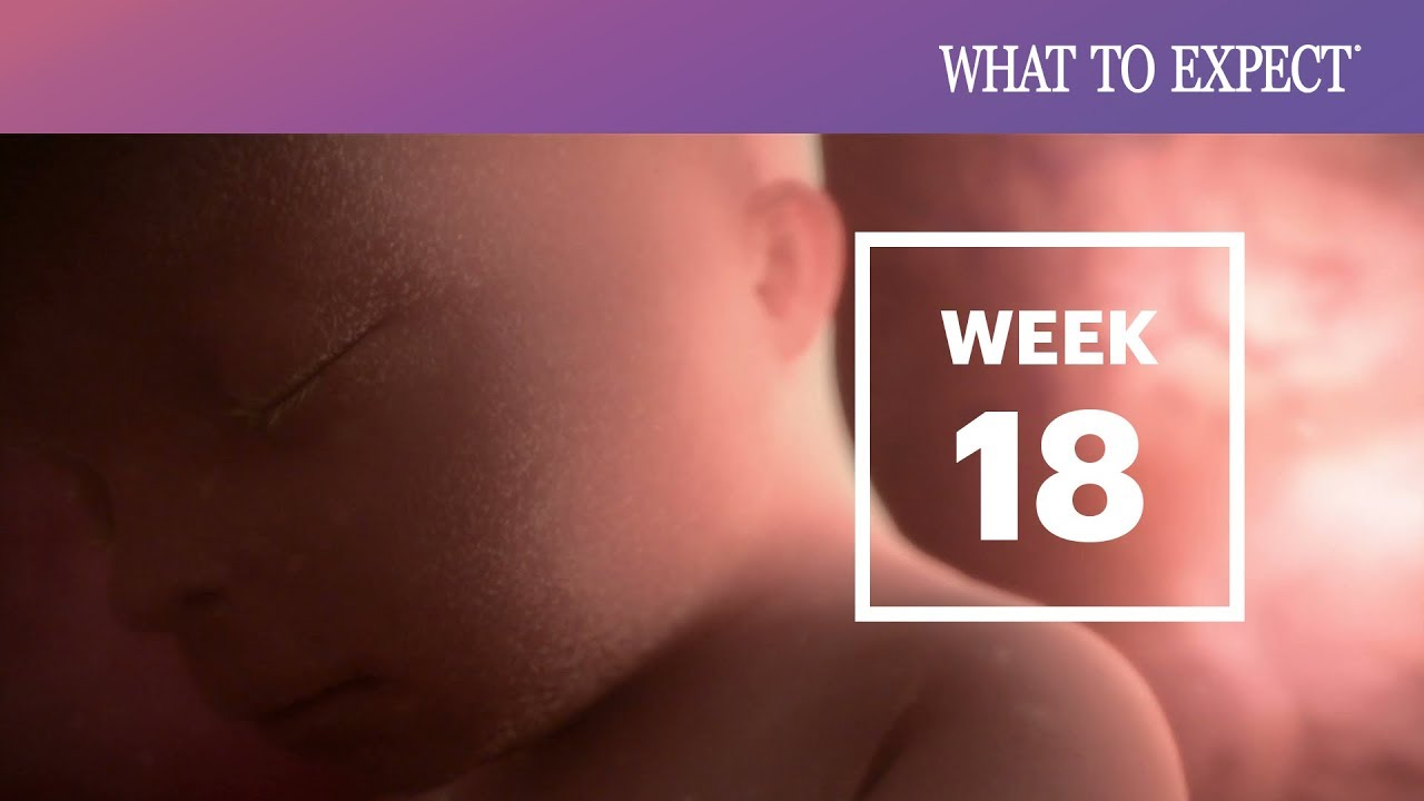 hight resolution of 18 weeks pregnant what to expect