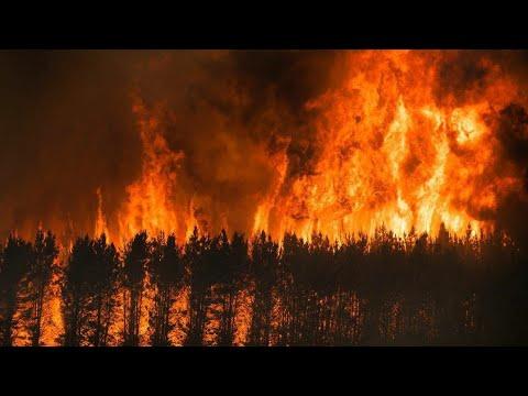 Пожар в лесуэто еще не конец. Год после пожара.