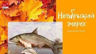 Ноябрьский жерех Первый коник ноября