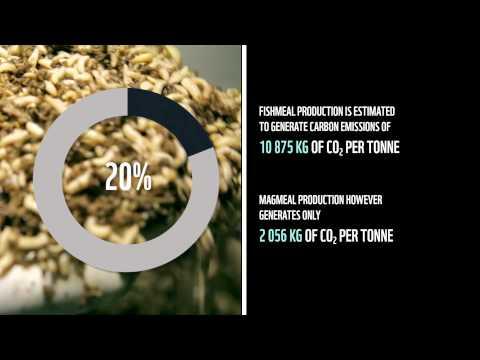 WWF-SA Climate Solver: MagMeal