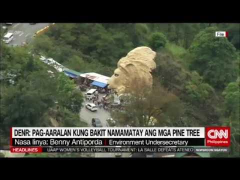 Rehabilitasyon ng pine trees sa Baguio City, pinaplano ng Environment Department