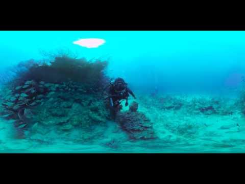 360-Degree Underwater World: Boca Reef