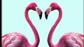 Flamingo.mp3