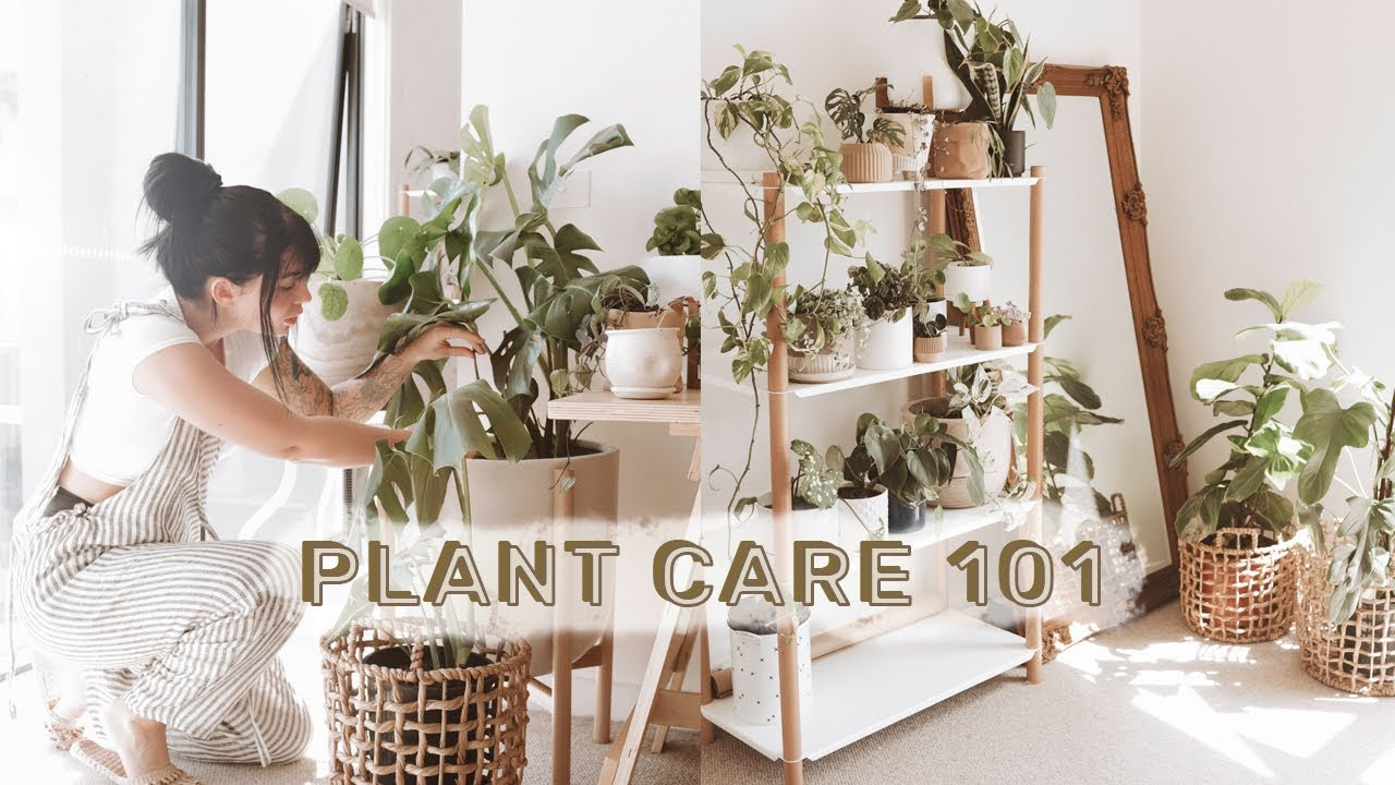 How To Care For Indoor Plants + GREENIFY YOUR SPACE Caring House Plants on tall slim plants, talking plants, positive energy plants, respecting plants, sharing plants, awesome plants, most important plants, detailed plants, creative plants, england plants, strong plants, balanced plants, resilient plants, learning plants, meaningful plants, peaceful plants, tough plants, protecting plants, friendly plants, loving plants,
