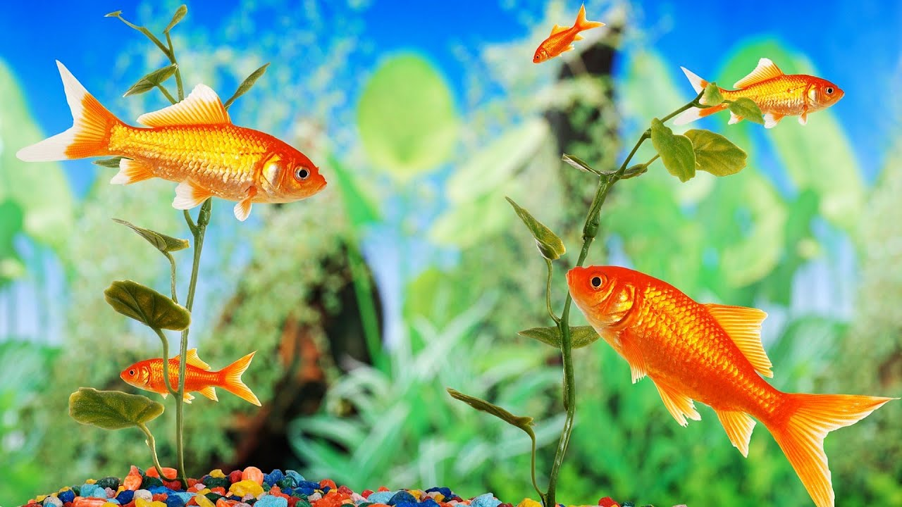 Fish tank electricity cost - What S A Good Fish Tank For A Beginner