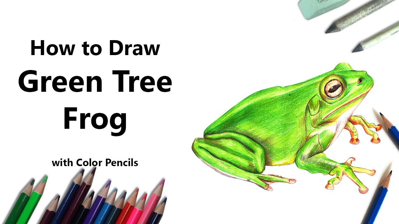 How to Draw a Green Tree Frog with Color Pencils [Time Lapse] - YouTube