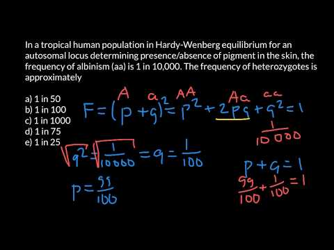 How to apply Hardy-Weinberg formula in order to solve genetics problems