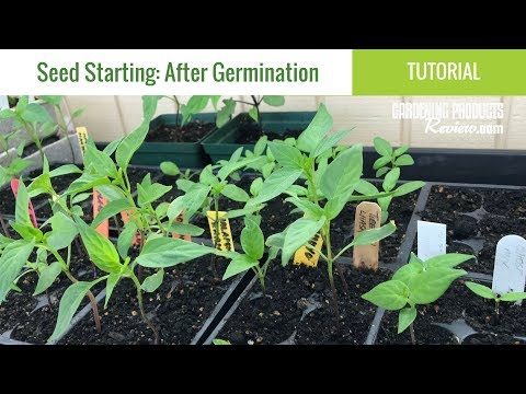 seeds-have-germinated:-now-what?-how-to-care-for-seedlings-|-seed-starting-part-2