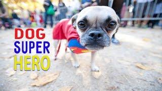 Собака супергерой