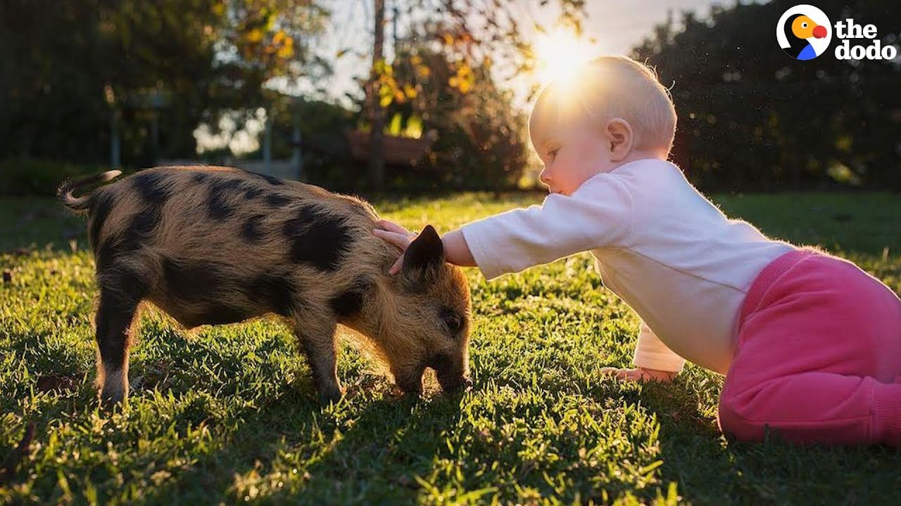 Baby Girl's Brother Is A Pig | The Dodo