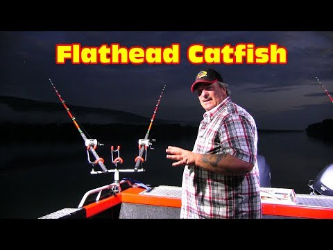 Fishing For Flathead Catfish, I Finally Weigh A Fish.