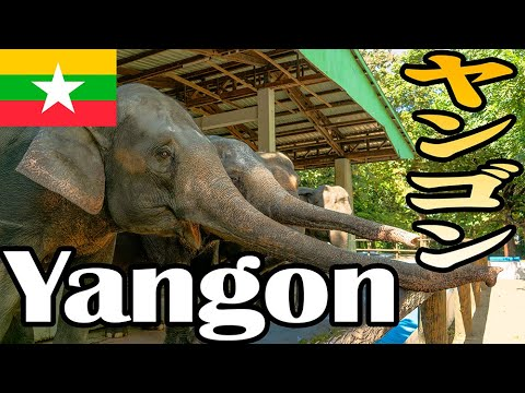 【4K】Walking the Yangon Zoo @ Myanmar〜ヤンゴン動物園を歩く〜#10【Gopro】