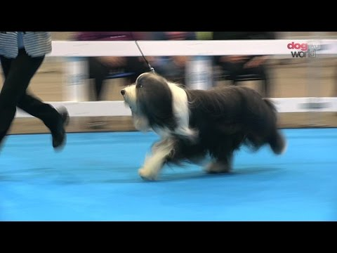 Midland Counties Dog Show 2016 - Pastoral group Shortlist