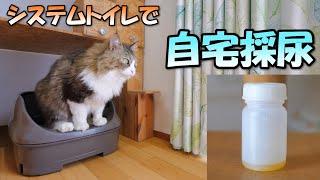 自宅で猫のおしっこを採取する方法【システムトイレで簡単採尿】