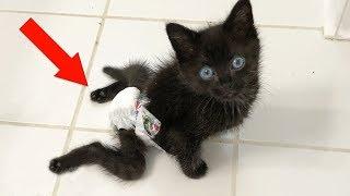 Süße Katze wird überfahren, was dann passiert grenzt an ein Wunder!