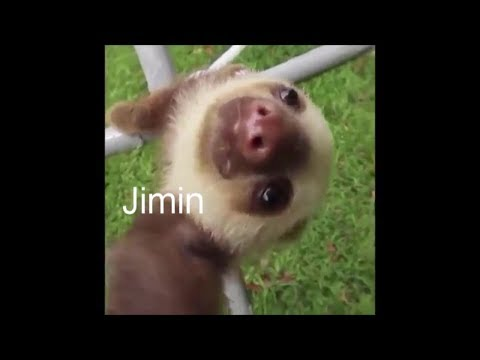 BTS As Animals Vines (Totally Never Been Done Before)