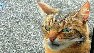 ПРИКОЛЫ С ЖИВОТНЫМИ Смешные Животные Собаки Смешные Коты Приколы с котами Забавные Животные 113