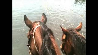 Cattle Drive ~ Cowboyin