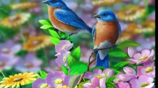 TWO BIRDS ON A WIRE (Regina spektor)-1 HOUR LOOP