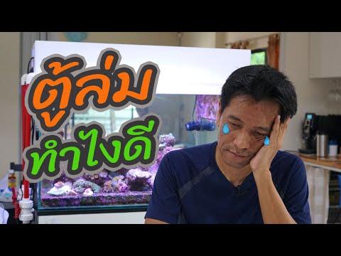 ตู้ทะเล EP.33 ปะการังตายยกตู้ เรียนรู้จากสิ่งที่ผิดพลาด