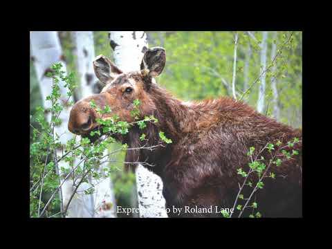 Wood River Valley Wildlife