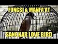 Inilah Manfaatnya Cendet Memakai Sangkar Love Bird Romo Channel  Mp3 - Mp4 Download