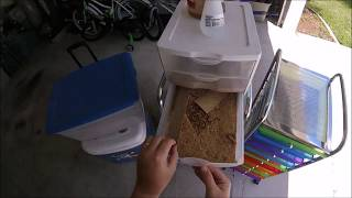 Weekly Mealworm Maintenance