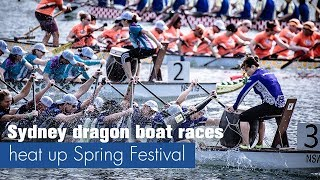Live: Sydney dragon boat races heat up Spring Festival悉尼达令港百余龙舟竞相欢庆中国新年