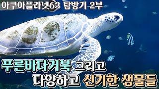 [모아이] 열심히 헤엄치는 바다거북 그리고 신기한 생물…