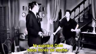 """Orquídea Negra"""
