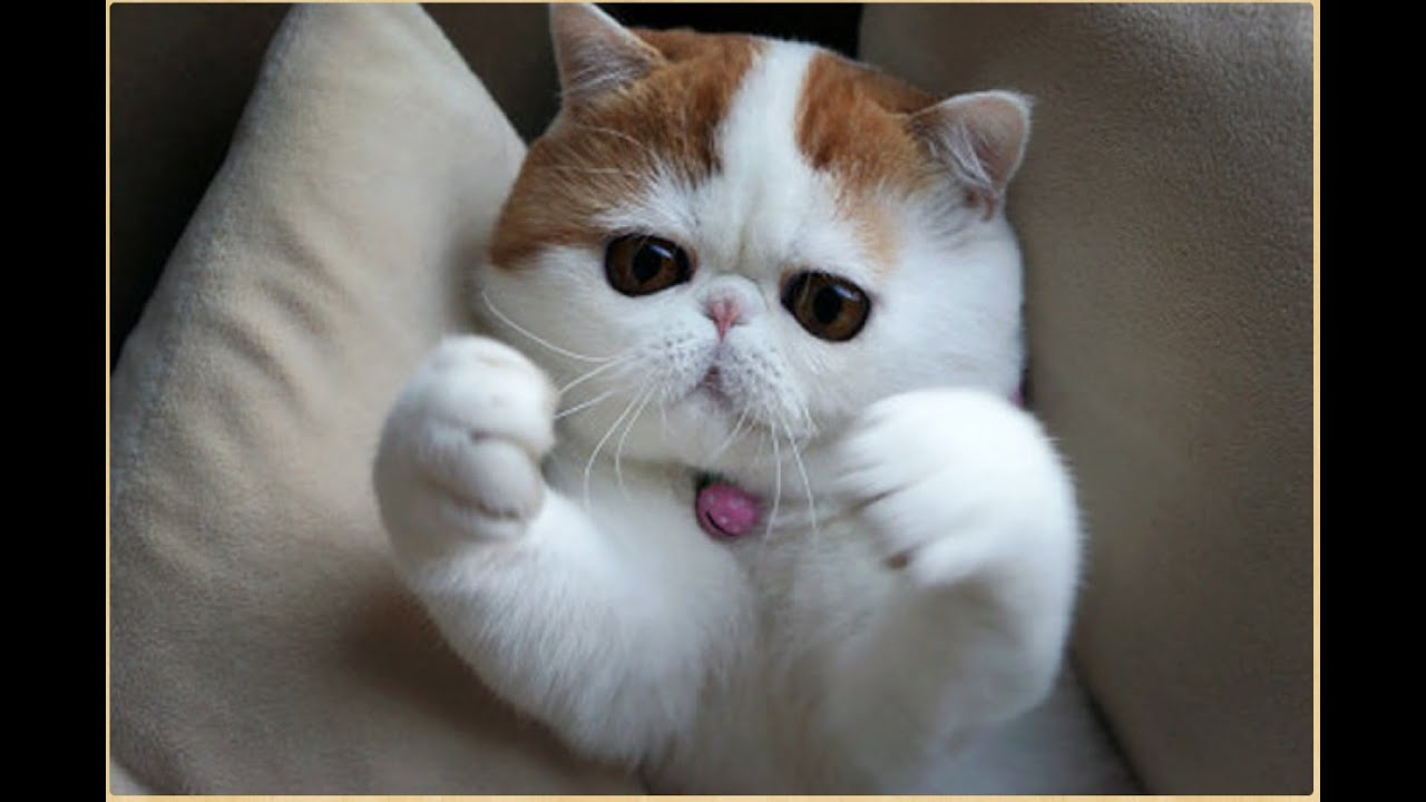Кот обнимашки фото