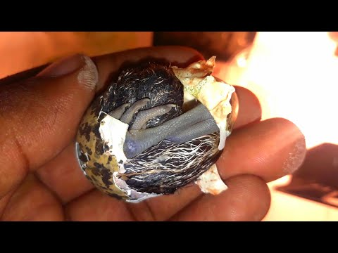 OMG! dragon bird egg from rain water