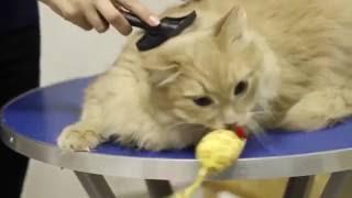 PET360  - SPA салоны для животных в Санкт Петербурге(, 2016-05-26T09:09:31.000Z)