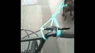 Dog pulling me on me bike