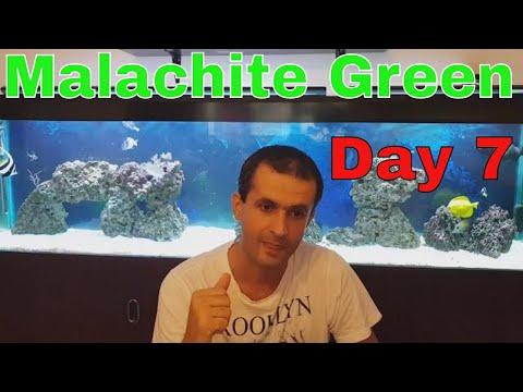 Malachite Green Treatment Reef Aquarium Day 7 Update