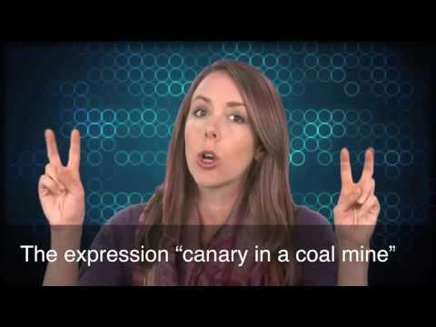 English in a Minute: Canary in a Coal Mine