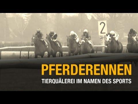 Pferderennen Tierquälerei