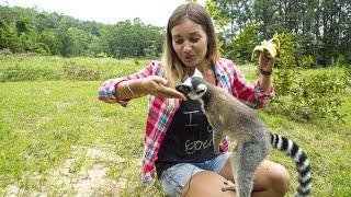 Лемуры Мадагаскара| Мадагаскар часть 3| АФРИКА