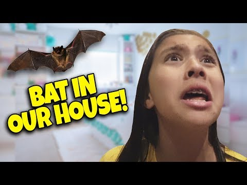 BAT TERRORIZES LITTLE GIRL!!! Angry Bat in Our House! Scariest Halloween Ever!